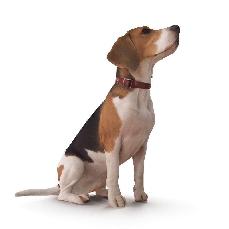 3D beagle 2017