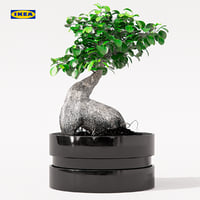 FICUS MICROCARPA GINSENG plant with pot - IKEA