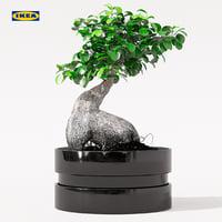 3D ficus microcarpa ginseng plant pot