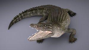 nile crocodile 3D model
