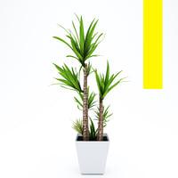 palm tree in pot Flowerpot pot model