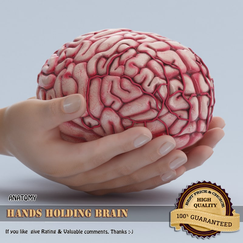 hands holding brain 3D