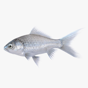 silver fish animation 3D model