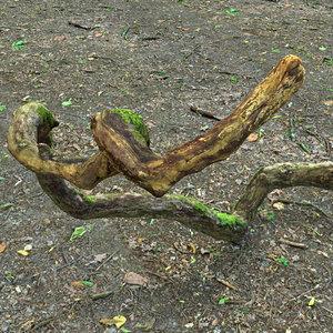 branch 3D model