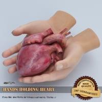 3D hands holding heart