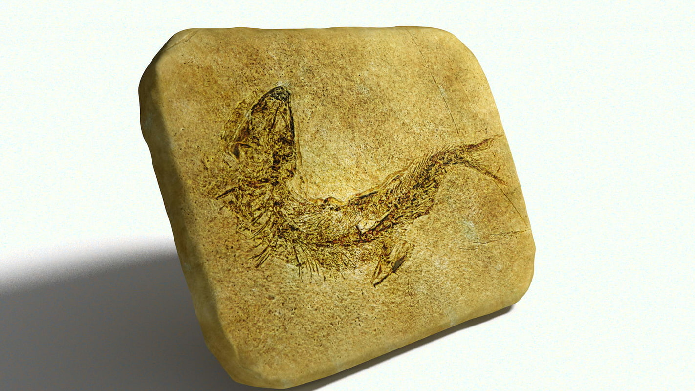 3D fossil stone fish