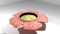 flower rafflesia 3D model