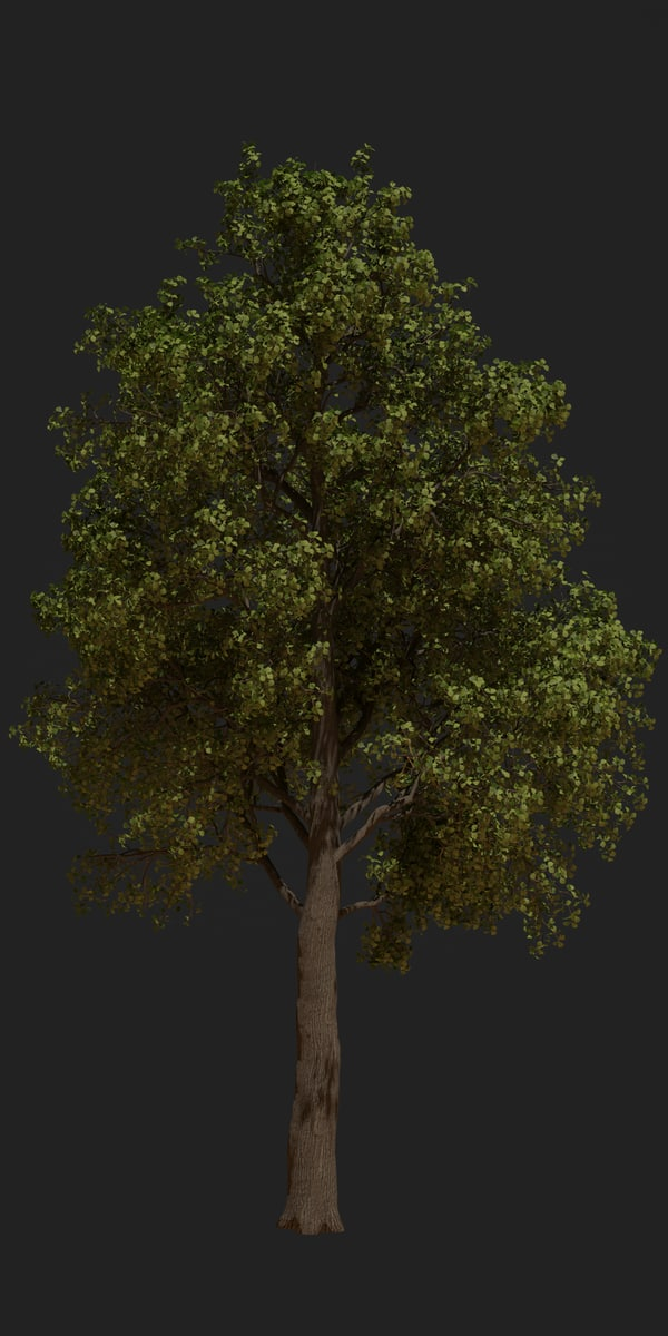 3D oak tree animation model