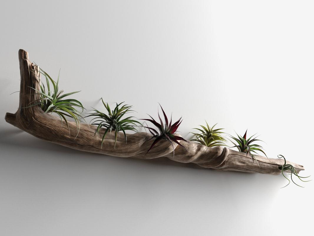 driftwood plants 3D model