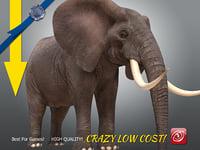 Elephant maleA T-pose