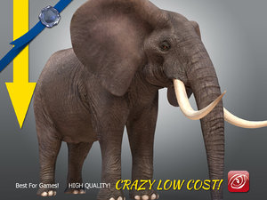 african male elephant 3D
