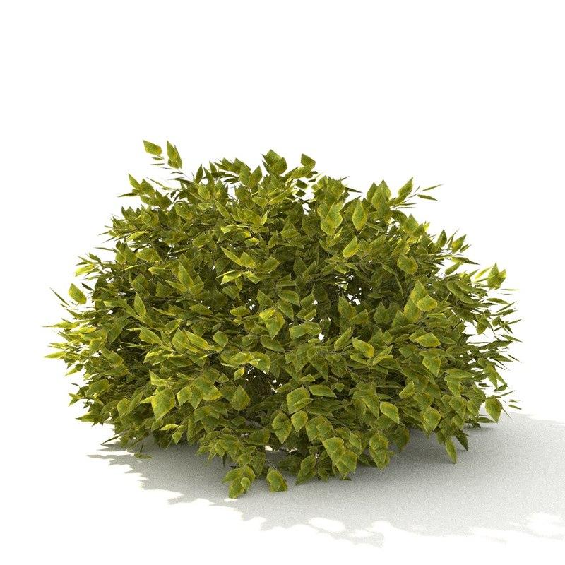derain leaf 3D model
