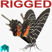 bhutanitis lidderdalii butterfly rigged 3D model