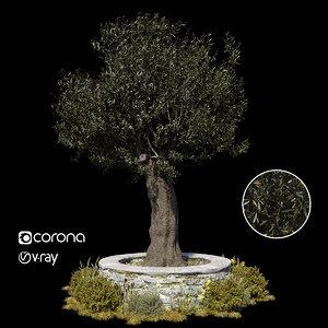 olive tree 3D model