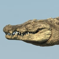 Crocodile Maya Rig (studio license)