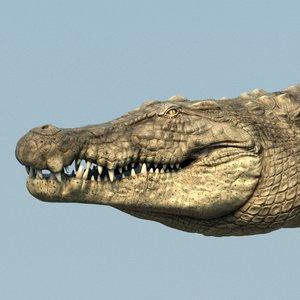 crocodile rig 3D model
