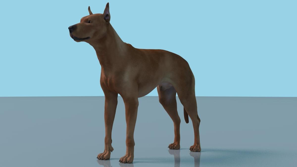 german pinscher dog rigged 3D model
