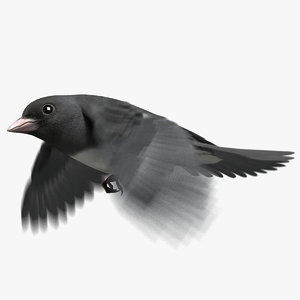 dark-eyed junco animation eye 3D model