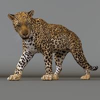 leopard rig 3D model