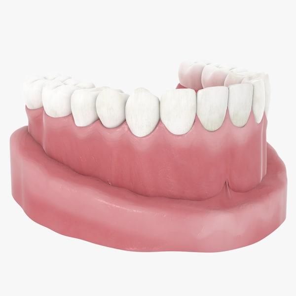 teeth jaw model