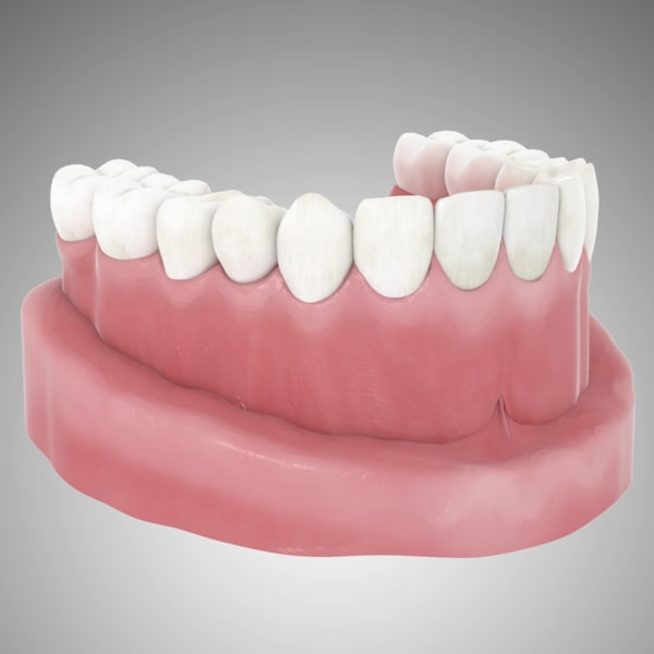 teeth jaw model