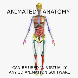 3D model anatomy male skeleton included