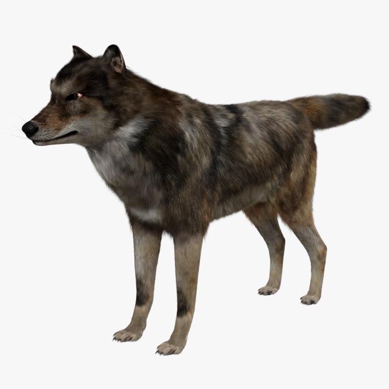 wolf rigged blender 3D model
