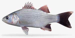 3D white bass