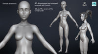3D female basemesh mesh model