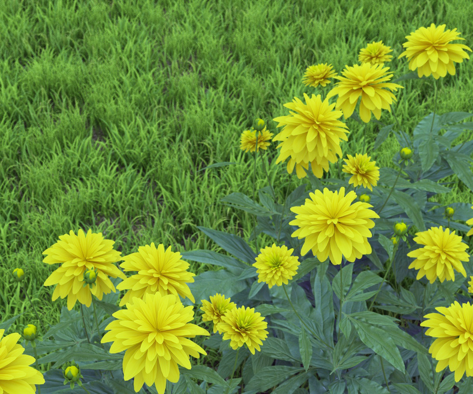 flowerbed rudbeckia dissected 3D model