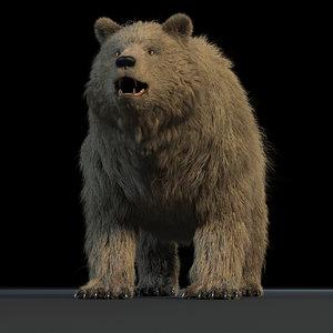3D bear rig model