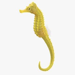 3D seahorse stemcell