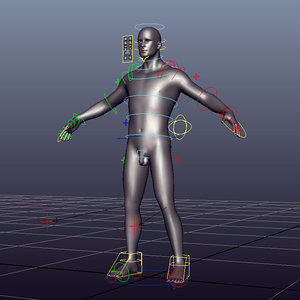 human male zbrush rigged 3D model