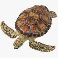 3D model sea turtle stemcell