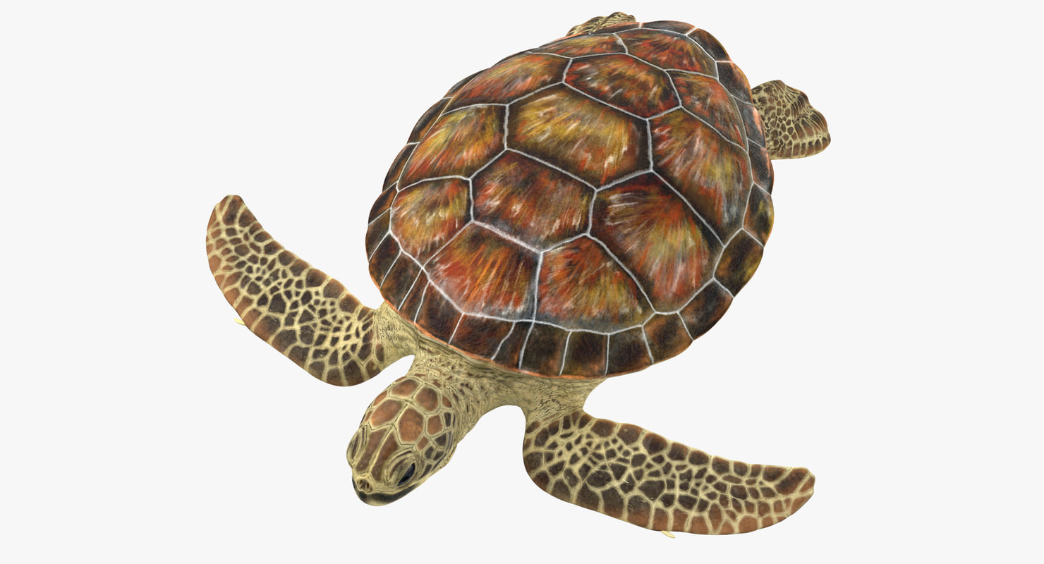 3D model sea turtle stemcell
