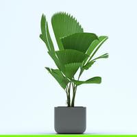 lady palm 3D
