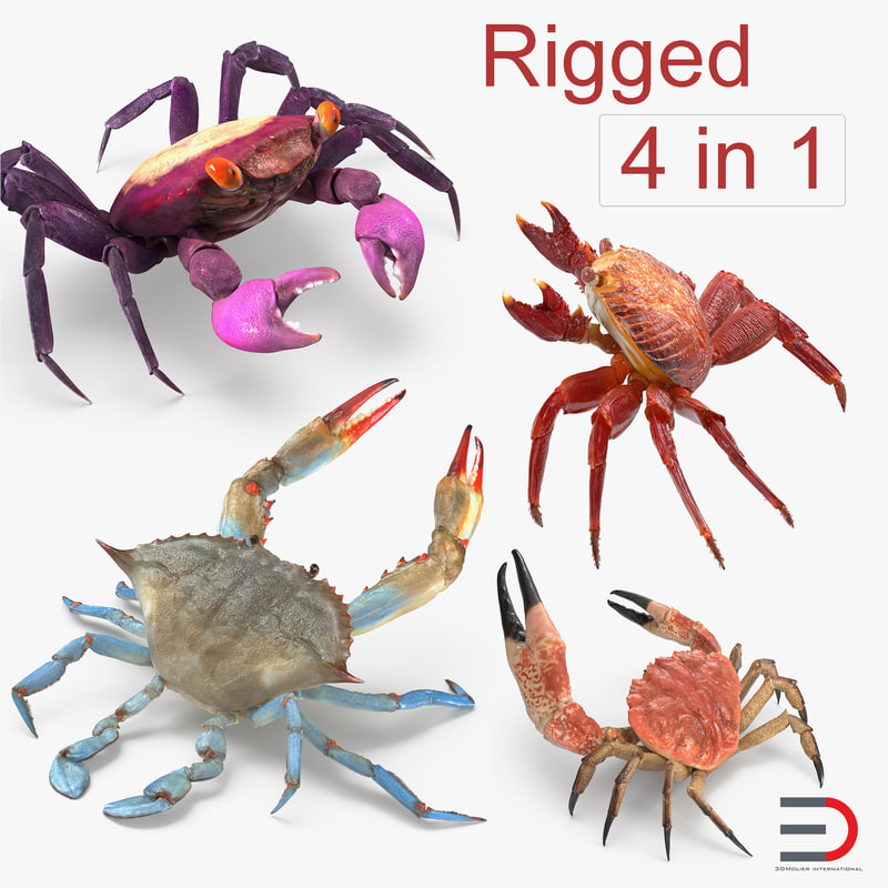 3D rigged crabs model