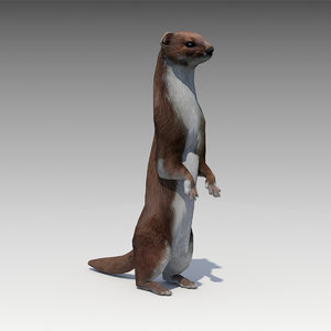 3D weasel model