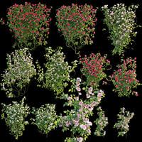 3D roses bush model