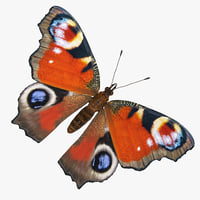 3D model aglais io european peacock
