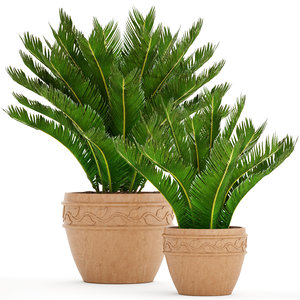 cycas palm tree 3D model