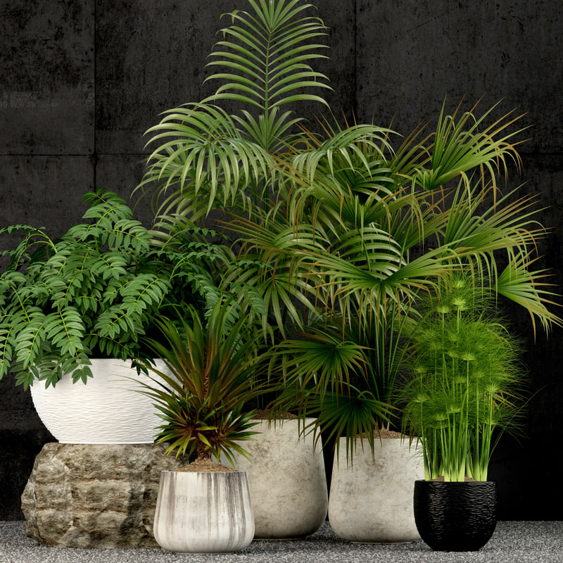 3D plants 53 model