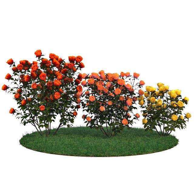 3D roses bushes set