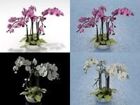 3D orchid n