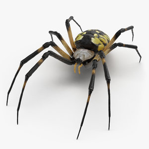 argiope aurantia yellow garden 3D model