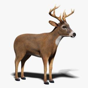 3D deer fur model