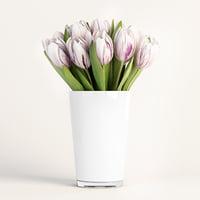 flag tulip 3D model