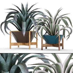 3D agave
