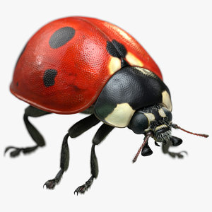 ladybug fur ornatrix 2 3D model
