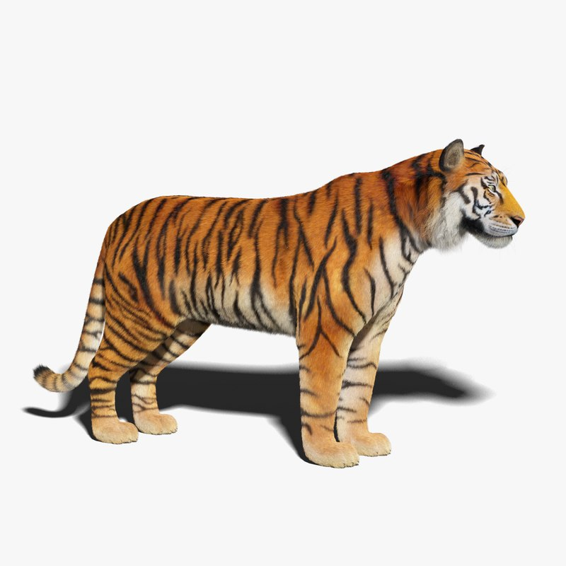 3D tiger fur